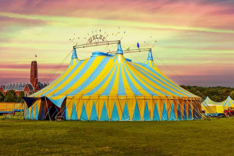 Les spectacles de cirque sont géniaux, mais derrière ces magnifiques numéros il y a d'horribles abus d'animaux