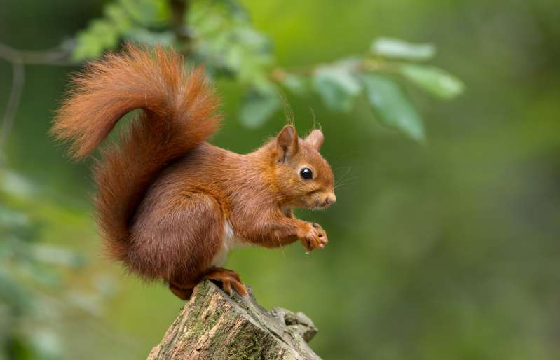 Prince Charles' Unique Interest In Red Squirrels Comes To Light As He Celebrates 70th BirthdayPrince Charles' Unique Interest In Red Squirrels Comes To Light As He Celebrates 70th BirthdayPrince Charles' Unique Interest In Red Squirrels Comes To Light As He Celebrates 70th Birthdayprince charles