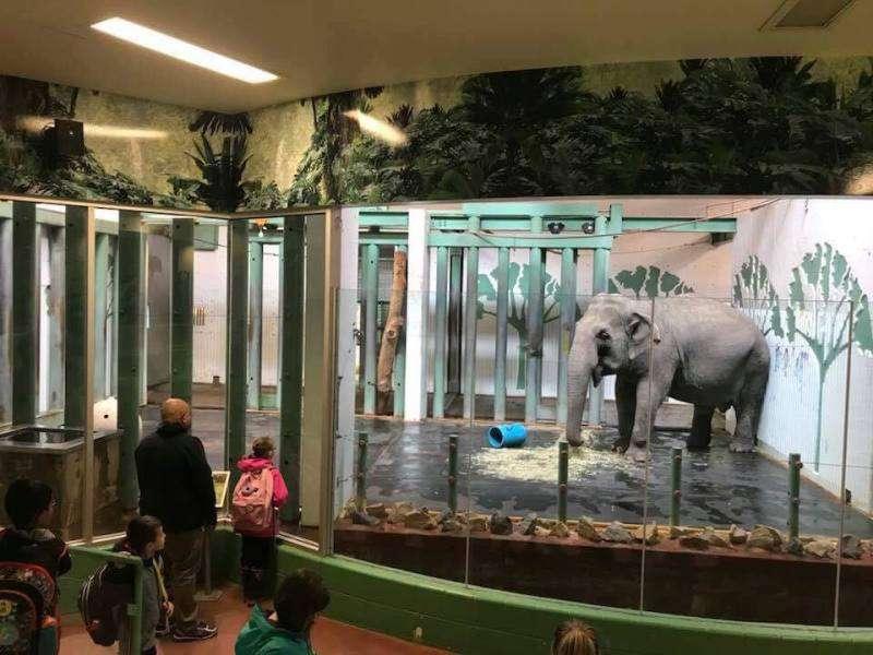 Cet éléphant de zoo est seul dans sa cage en verre depuis 11 ans ; une association se bat pour la sauver