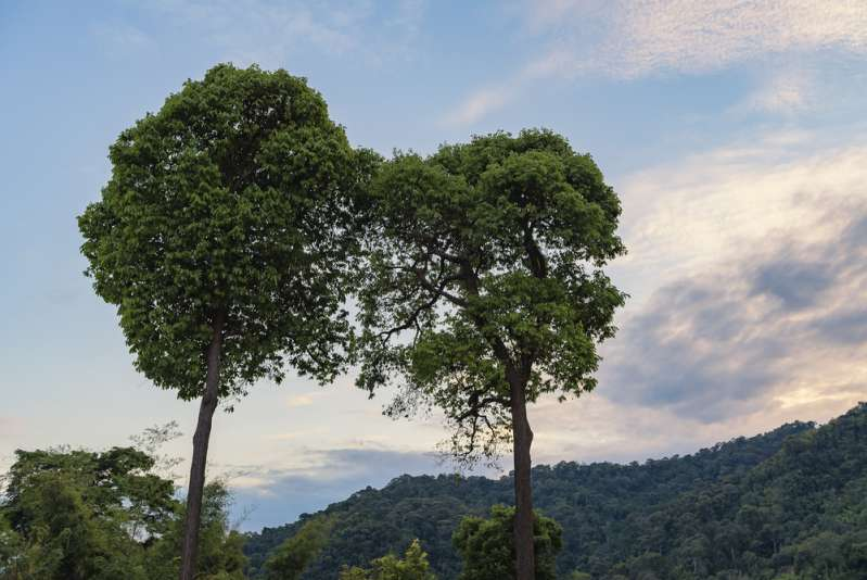 Trees Have Feelings And Take Care Of  Each Other, Just Like Families, Scientists Claimstudy about trees
