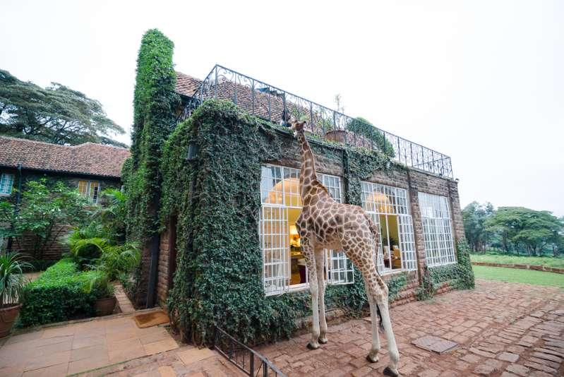 Невероятно, но факт: что общего между шеей человека и жирафаgiraffe