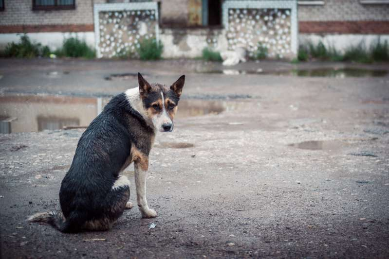 Hachiko From China: A Loyal Dog Waited 80 Days For Its Master At The Place Where She'd Passed Awayanimal abuse