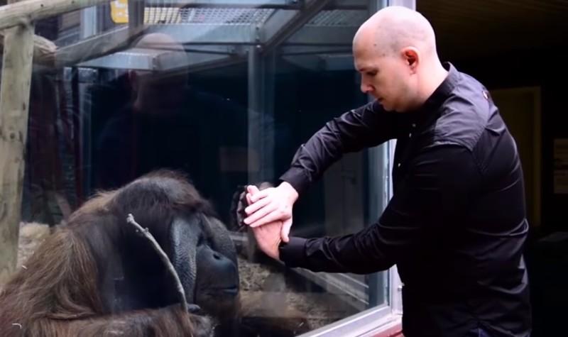 Meister-Illusionist, Matt G, erlebte einen dieser Momente, und er zeigte einem Primaten einen Karten-TrickMeister-Illusionist, Matt G, erlebte einen dieser Momente, und er zeigte einem Primaten einen Karten-Trick