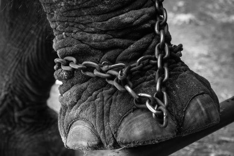 Abuso animal desmedido: Desde simple negligencia propia hasta crueles experimentos de laboratorio