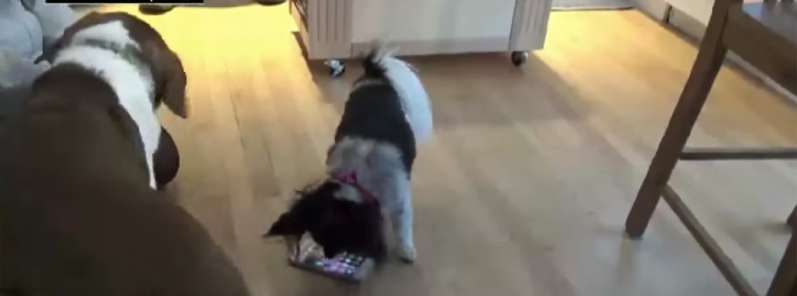 Two Naughty Dogs Who Needed Some Attention Fooled Around And Called 911 16 Times, And We Can't Stop Laughing