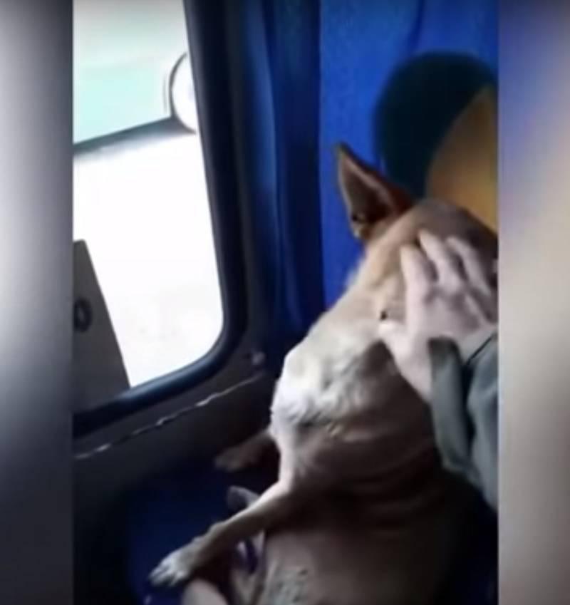Водитель автобуса разрешил погреться замерзшему псу: животное вело себя лучше многих пассажиров-людейВодитель автобуса разрешил погреться замерзшему псу: животное вело себя лучше многих пассажиров-людейdog takes a bus chile