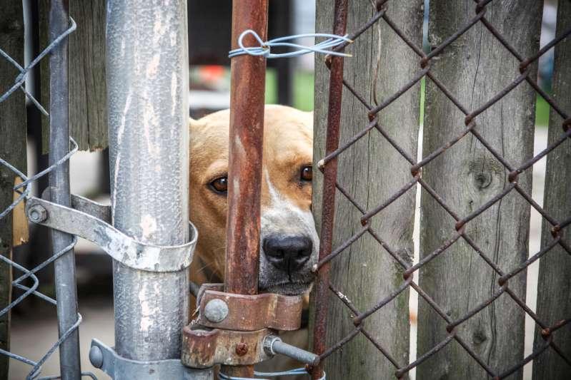 Heroisch: Verlassener Hund hörte nicht auf zu bellen, bis 10 kranke Welpen gerettet wurdendogs