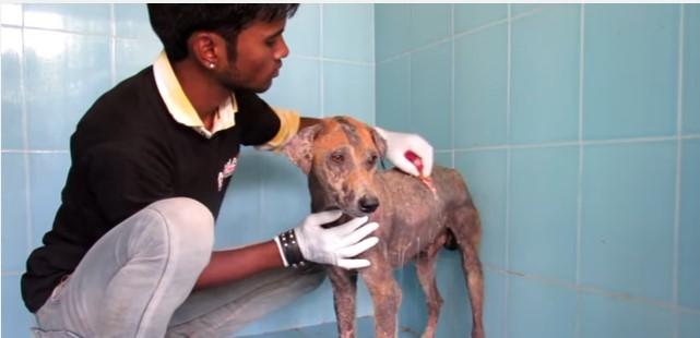 Cachorro é encontrado com diversas feridas pelo corpo, mas após apenas 8 semanas de tratamento, ele ficou incrível!