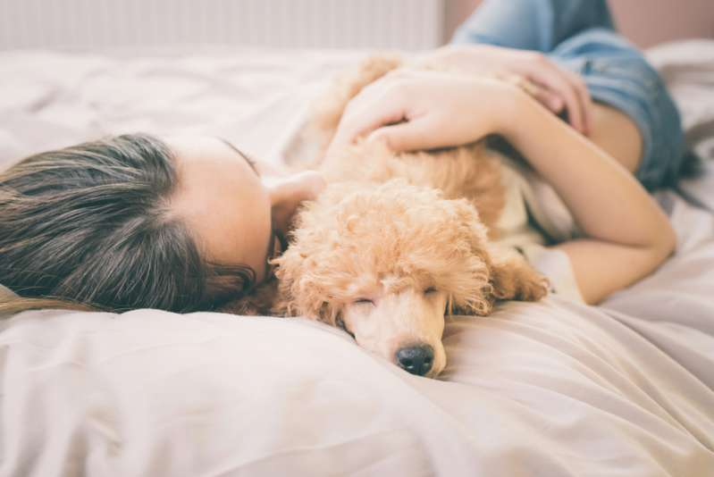 Study Shows That Women Who Share A Bed With A Dog Have A Better Quality Of Sleep Than With Other Partners