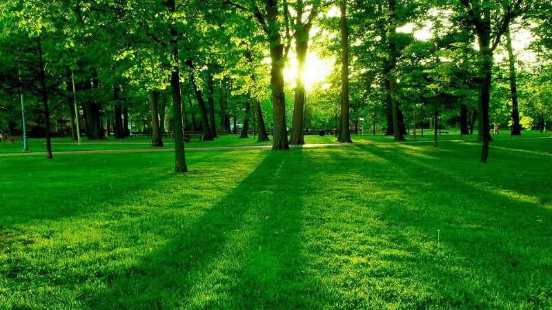 Las 20 Mejores Frases Sobre Naturaleza