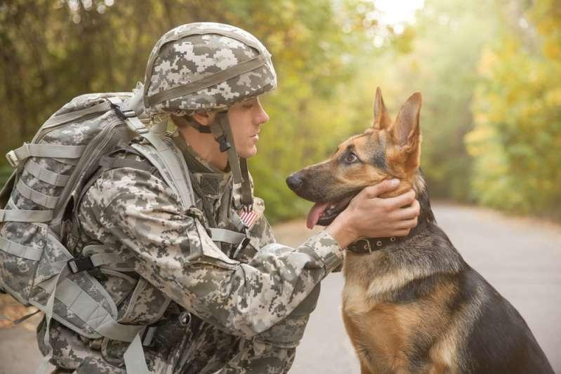 Military Vet, Service Dog