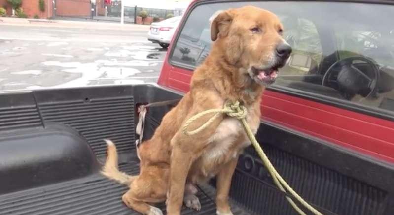 Älterer Hund wanderte alleine durch die Straßen, aber eine liebevolle Familie schenkte ihm ein besseres Leben