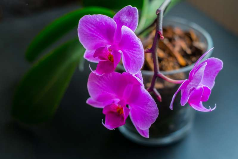 How To Properly Water Your Beautiful Orchids? Is The Ice Cubes Trick Good Or Bad?How To Properly Water Your Beautiful Orchids? Is The Ice Cubes Trick Good Or Bad?Pink orchid in a transparent pot