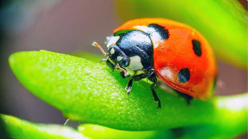 Un horoscope spécial : l'esprit insecte de chaque signe du Zodiaqueladybug