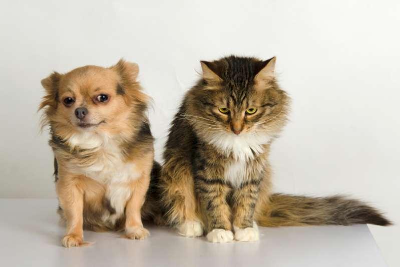 Wundervolle Freundschaft: Ein herzerwärmendes Video zeigt einen Hund, der eine Katze vor extremem Wetter rettet und in seine Hundehütte bringt