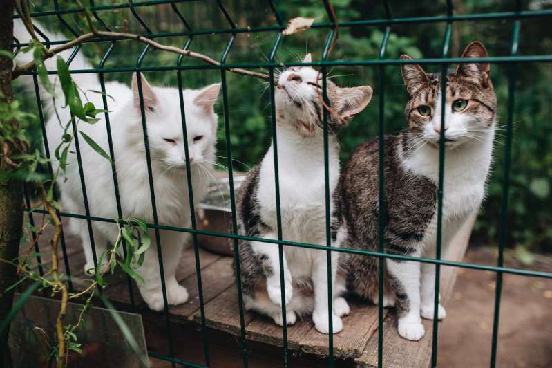 Animal Abuse Statistics Show Improvement But There's Still A Long Road Ahead