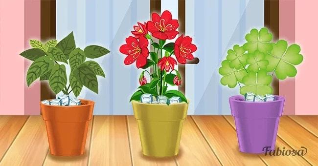 une astuce tr s simple pour que les plantes d int rieur puissent vivre plus longtemps sur fabiosa. Black Bedroom Furniture Sets. Home Design Ideas