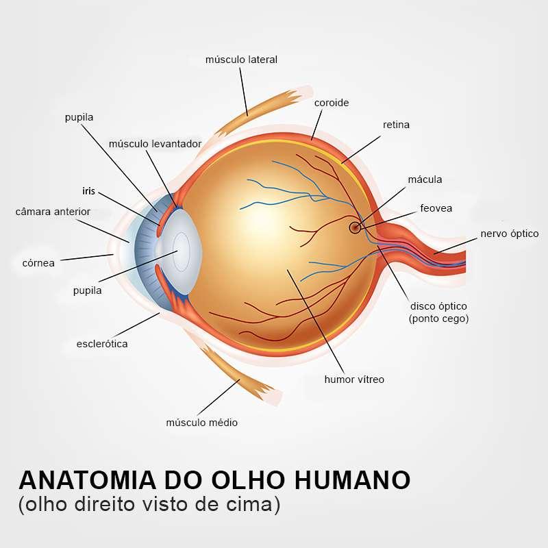 cfe418605 Ginástica para os olhos: 6 exercícios que vão ajudar a melhorar a sua visão