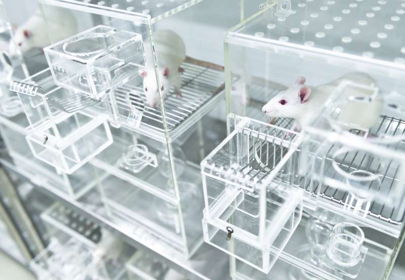 Animal Testing Is A Very Controversial Problem But There Are New Alternatives That Can Put An End To It