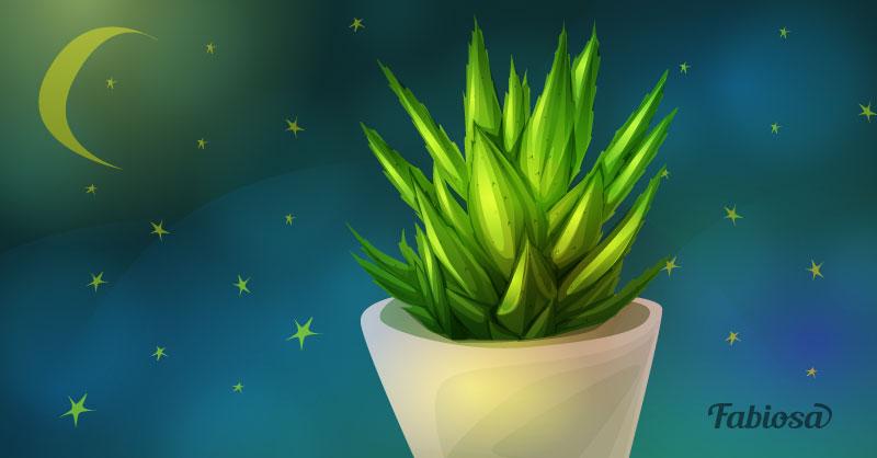 Voici 7 plantes d 39 int rieur pour la chambre pour mieux dormir et respirer un air plus pu - Plante dans la chambre ...