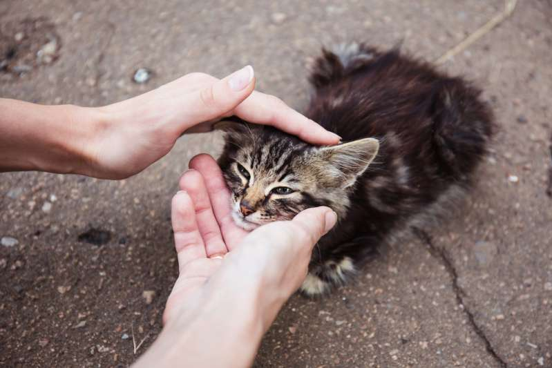 "Woman Saved This Tiny Kitten From Dogs And Was Stunned With Its ""Royal"" Size A Year LaterAbandoned stray cat is being petted by a person"