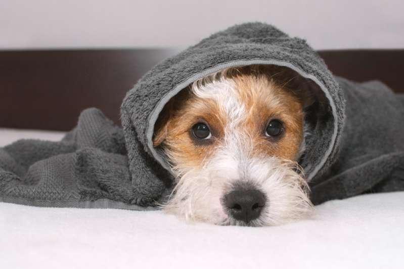Abandonnée dans une allée, couverte de peinture et brutalisée, cette jeune chienne s'est finalement remise