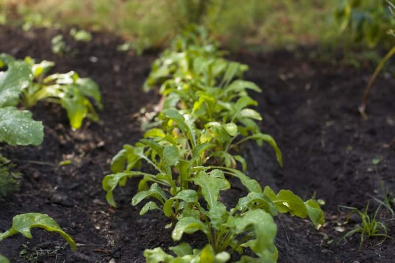 Die besten Pflanzen und Gemüsesorten für den Anbau im August