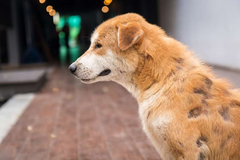 C'est affreux ! Parce qu'elle avait 15 ans, cette chienne a été abandonnée par sa famille pour un chiot plus jeune.