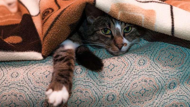 Estudio comprueba que la razón la cual los gatos son solitarios se debe a un error en nuestra conductaEstudio comprueba que la razón la cual los gatos son solitarios se debe a un error en nuestra conductadasda
