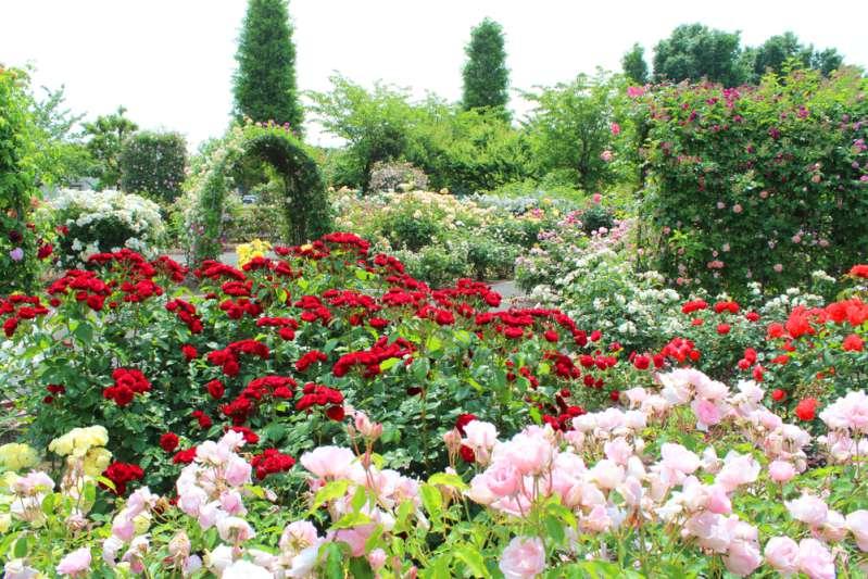 « J'ai besoin de fleurs et vous en avez plein votre jardin ! » Une mariée se faufile dans le jardin de sa voisine et y vole des fleurs qui coûtent cher