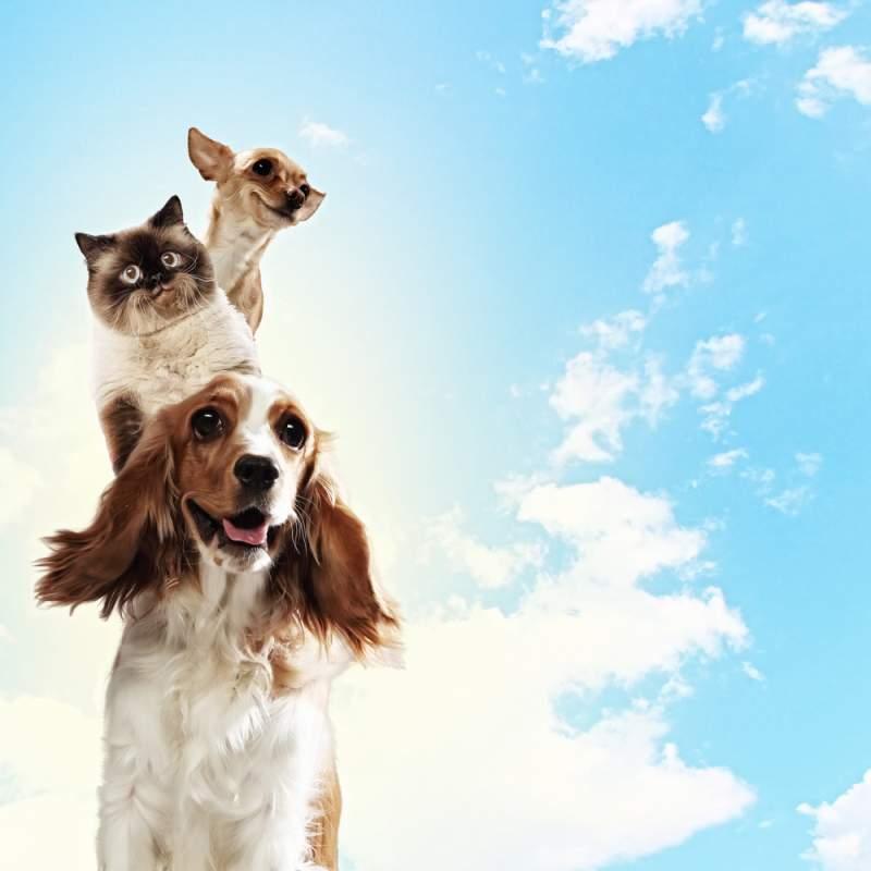 ¡El chiste del día! Dos perros y un gato tienen su entrevista con Dios para poder entrar al cielo