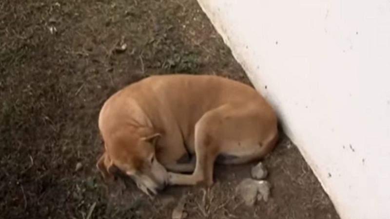 """""""Se lo querían llevar, pero se quedó"""": perrito lleva 2 años buscando a su dueño fallecido en el hospital""""Se lo querían llevar, pero se quedó"""": perrito lleva 2 años buscando a su dueño fallecido en el hospital""""Se lo querían llevar, pero se quedó"""": perrito lleva 2 años buscando a su dueño fallecido en el hospital""""Se lo querían llevar, pero se quedó"""": perrito lleva 2 años buscando a su dueño fallecido en el hospital"""