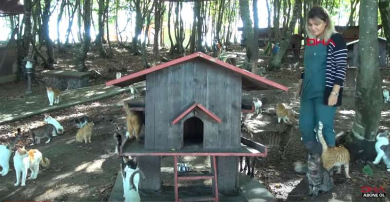 This Cat Town, Created Exclusively For Homeless Cats, Is Better Than Five-Star Hotel!