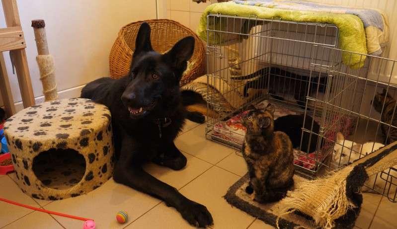 Depois de ser abandonado nas ruas por causa de deficiência, este cachorro cuida dos gatos do abrigo