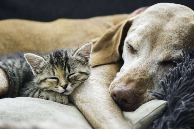 Beautiful Friendship: Dog Rescues Cat In Harsh Weather And Takes Its Feline Friend To Its Kennel In Heartwarming Viral VideoBeautiful Friendship: Dog Rescues Cat In Harsh Weather And Takes Its Feline Friend To Its Kennel In Heartwarming Viral VideoBeautiful Friendship: Dog Rescues Cat In Harsh Weather And Takes Its Feline Friend To Its Kennel In Heartwarming Viral VideoBeautiful Friendship: Dog Rescues Cat In Harsh Weather And Takes Its Feline Friend To Its Kennel In Heartwarming Viral Video