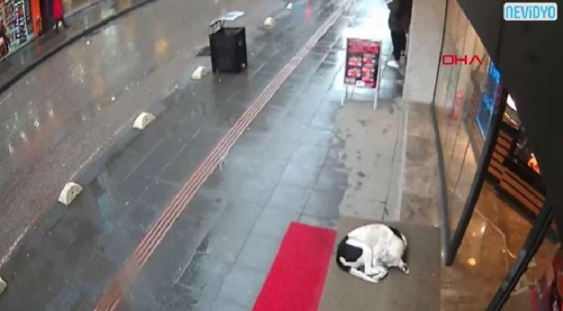 Woman Sees Frozen Stray Dog On The Streets, And Covers Her With Her Own Scarf