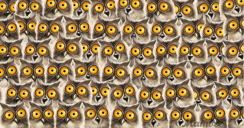 There Is A Tricky Cat Hiding Among Bunch Of Owls, But It Might Take A While To Find It