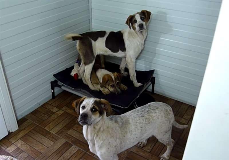 Alertaron al equipo de rescate canino de unos aullidos y, al llegar, hallaron 7 crímenes horrendos