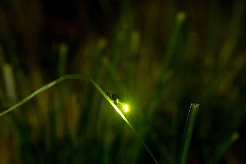 Un horoscope spécial : l'esprit insecte de chaque signe du Zodiaquefirefly