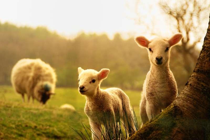 Qual è lo spirito animale che ti protegge, secondo lo zodiaco?-