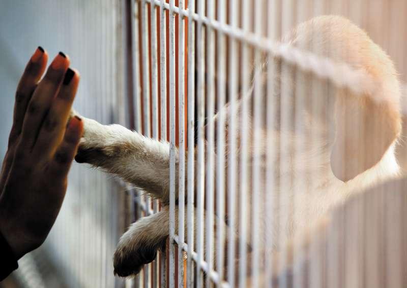 Diese Hündin Wurde Aus Einer Koreanischen Hundefleischfarm Gerettet