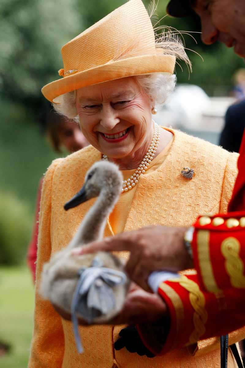 Queen Elizabeth Owns Many Swans And Dolphins, And Not Only In The UK. How Come?Queen Elizabeth II smiles as she is shown an orphaned cygnet at Oakley Court