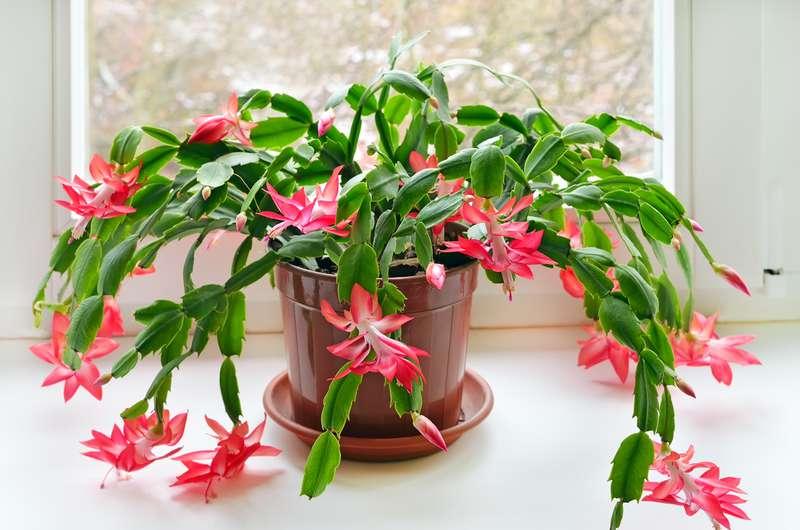 Wollen Sie saubere Luft in Ihrem Haus? Diese 9 Pflanzen sind genau das, was Sie brauchen!Wollen Sie saubere Luft in Ihrem Haus? Diese 9 Pflanzen sind genau das, was Sie brauchen!Wollen Sie saubere Luft in Ihrem Haus? Diese 9 Pflanzen sind genau das, was Sie brauchen!Wollen Sie saubere Luft in Ihrem Haus? Diese 9 Pflanzen sind genau das, was Sie brauchen!Wollen Sie saubere Luft in Ihrem Haus? Diese 9 Pflanzen sind genau das, was Sie brauchen!Wollen Sie saubere Luft in Ihrem Haus? Diese 9 Pflanzen sind genau das, was Sie brauchen!Wollen Sie saubere Luft in Ihrem Haus? Diese 9 Pflanzen sind genau das, was Sie brauchen!