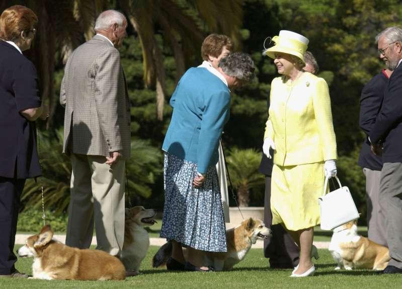 """La conmovedora historia de Lupo, el perro """"real"""" de Kate Middleton y el príncipe William"""