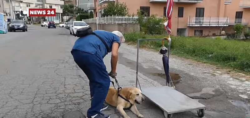 Man Who Walks His Impaired Labrador Is Praised For Restoring Faith In Humanity