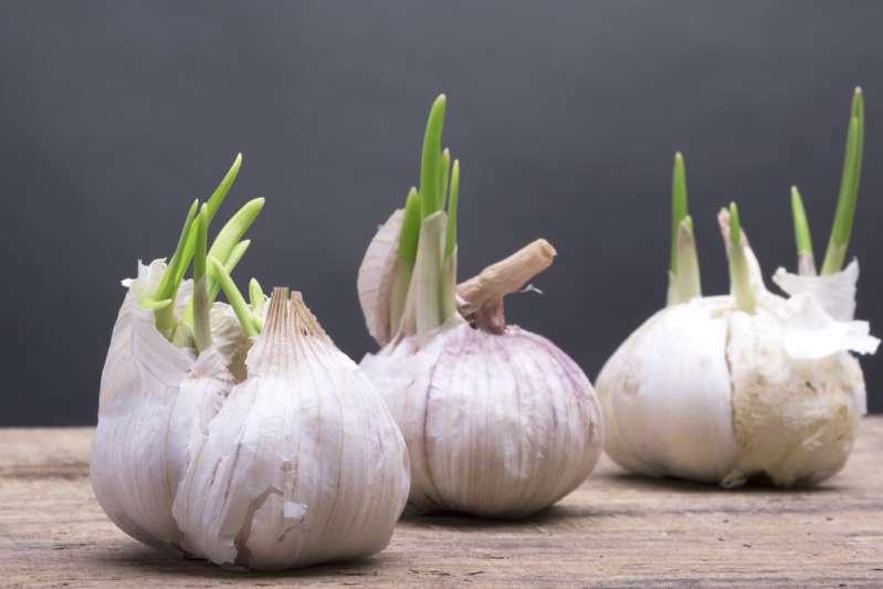 5 catégories d'aliments qui provoquent la mauvaise haleinesprouted garlic