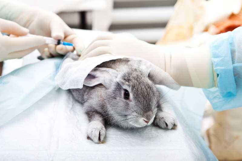La sperimentazione animale è un problema molto controverso, ma ci sono nuove alternative che possono mettere fine a questo