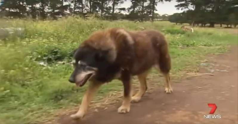 Maggie serait le plus vieux chien du monde. Elle s'en est allée paisiblement à 30 ans