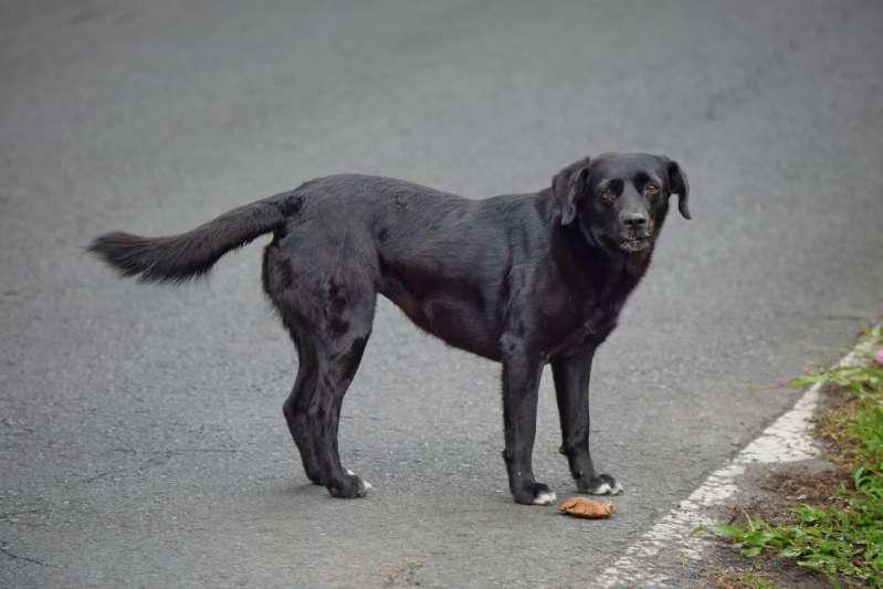 Malgré ses blessures, ce sans-abri n'a pas hésité à aller secourir son chien du froid glacial