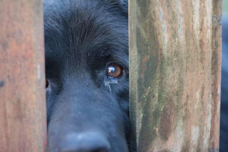 Безумно, но гениально: хозяин собаки придумал, как не дать питомцу скучать в его отсутствие